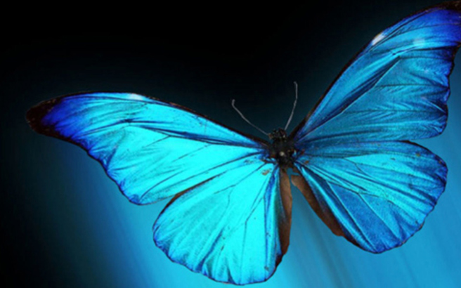 Οι πεταλούδες του «αιώνιου χρώματος»