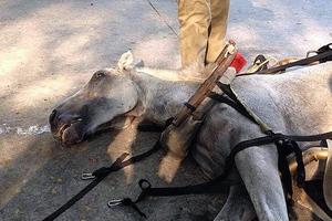 Άλογο πέθανε από υπερκόπωση