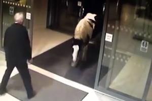 Εισβολή αλόγου σε αστυνομικό τμήμα