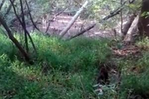 Γυμνός άντρας περιφερόταν για μέρες σε δάσος