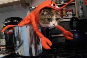 diy-halloween-pet-costumes-3