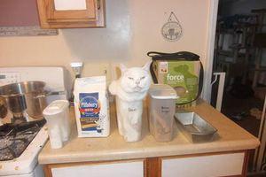 Όταν οι γάτες χώνονται παντού