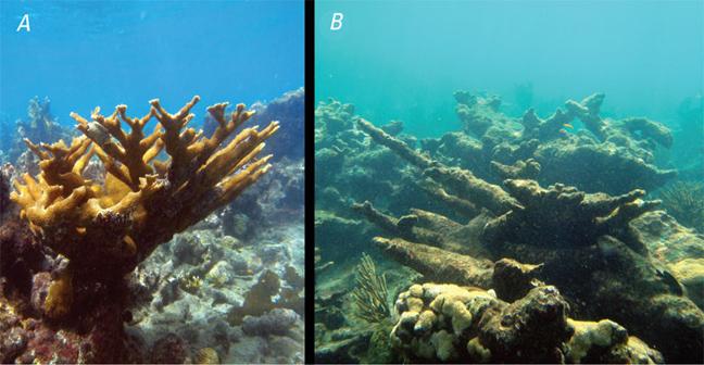 Οξίνιση των ωκεανών