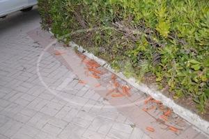 Επίθεση με... καρότα κατά του ΣΥΡΙΖΑ στην Κρήτη