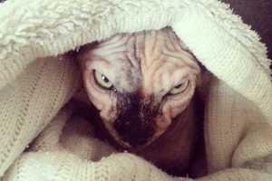 Γάτες από την κόλαση