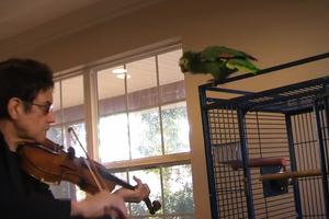 Ο παπαγάλος δεν είναι μουσικόφιλος