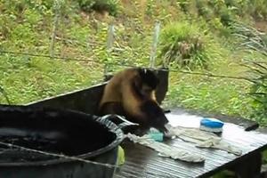 Η μαϊμού που βάζει μπουγάδα