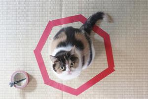 Πώς μπορείτε να... παγιδέψετε μια γάτα