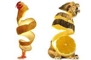 Ανακατεύοντας φαΐ και ζώα
