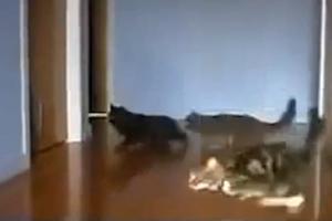 Όταν οι γάτες κάνουν drifting