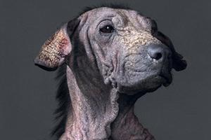 Συγκινητικά πορτρέτα σκύλων πριν την ευθανασία