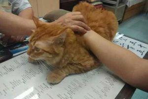 Κι όμως αυτή η γάτα... εργάζεται σε κλινική