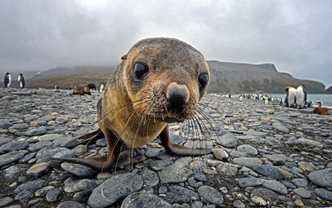 Εκπληκτικές φωτογραφίες από την Ανταρκτική