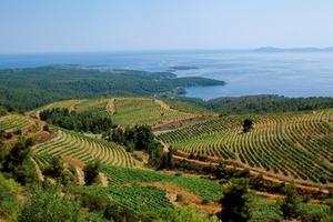 Η Βόρεια Ελλάδα γιορτάζει τον Οινοτουρισμό