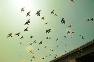 Κίνδυνος εξαφάνισης για τα πιο κοινά πουλιά της Ευρώπης