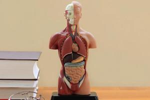 Τα 10 άχρηστα μέρη του σώματός μας