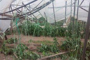 Ανεμοστρόβιλος «κατάπιε» θερμοκήπια στην Ιεράπετρα