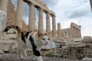 Γάτες ως... τουριστικές ατραξιόν