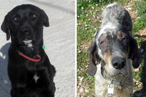 Χάθηκαν δύο σκυλάκια στο Πόρτο Ράφτη
