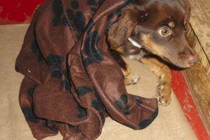 Στο φως νέα βάρβαρη κακοποίηση σκύλου