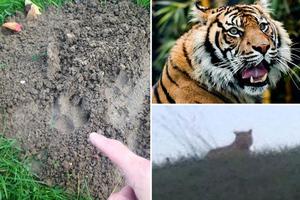 Συνεχίζουν να ψάχνουν την τίγρη στο Παρίσι