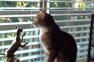 Ο κόσμος όπως τον βλέπουν οι γάτες