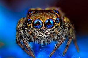 Σειρά φωτογραφιών σου επιτρέπει να κοιτάξεις τις αράχνες στα μάτια