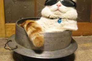 Γάτες με... στυλ