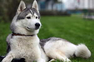 Μάστιγα οι φόλες σε σκυλιά στη Ρόδο