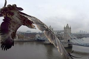 Το Λονδίνο μέσα από τα μάτια ενός αετού