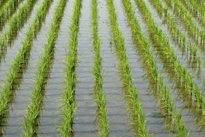 Διανομή ρυζιού και ρυζόγαλου στα Νέα Μάλγαρα