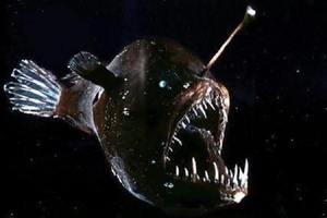 Το ανατριχιαστικό ψάρι που λέγεται ο «διάβολος της θάλασσας»