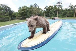 Το αρκουδάκι… σέρφερ!