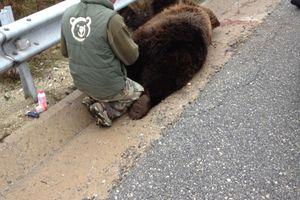 Νεκρή αρκούδα από τροχαίο στα Σιάτιστα