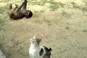 Τα παιχνίδια των ζώων