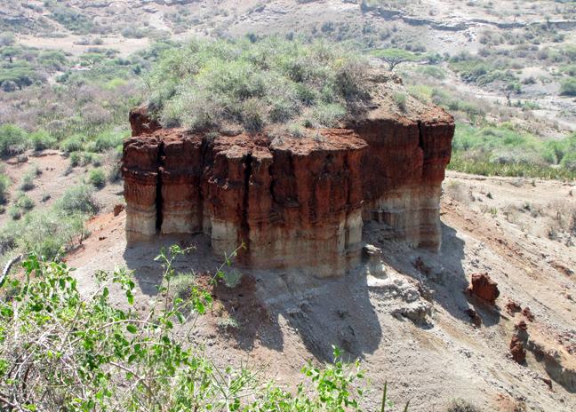 Τα Απολιθώματα του Ολντουβάι