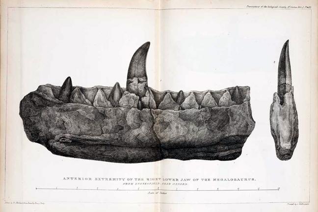 Τα Απολιθώματα των Δεινοσαύρων