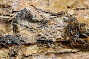Ο μικρός δεινόσαυρος της Ν. Κορέας