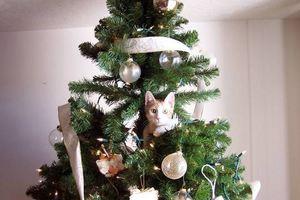 Γάτες και χριστουγεννιάτικα δέντρα