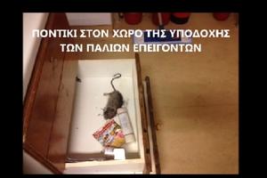 Ποντίκια στο νοσοκομείο της Νάξου