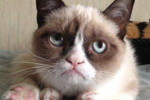 Η σερβιτόρα που έγινε εκατομμυριούχος εξαιτίας μια γάτας
