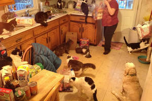 Εμμονή με τις γάτες