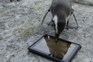 Ένα iPad... για τους πιγκουίνους