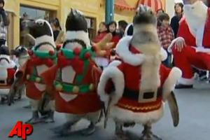 Πιγκουίνοι... αγιοβασίληδες