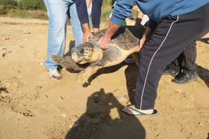 Θαλάσσια χελώνα επέστρεψε στο... σπίτι της