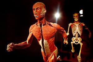 Ανθρώπινα πτώματα σε... μοναδικές χρήσεις