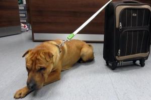Εγκατέλειψαν σκύλο μαζί με μια... βαλίτσα με τα υπάρχοντά του