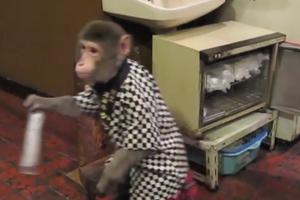 Μια μαϊμού για όλες τις δουλειές