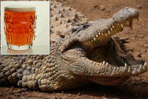 Μπύρα σκότωσε 56 άτομα γιατί περιείχε χολή κροκόδειλου