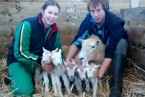 Προβατίνα γέννησε πέντε μικρά